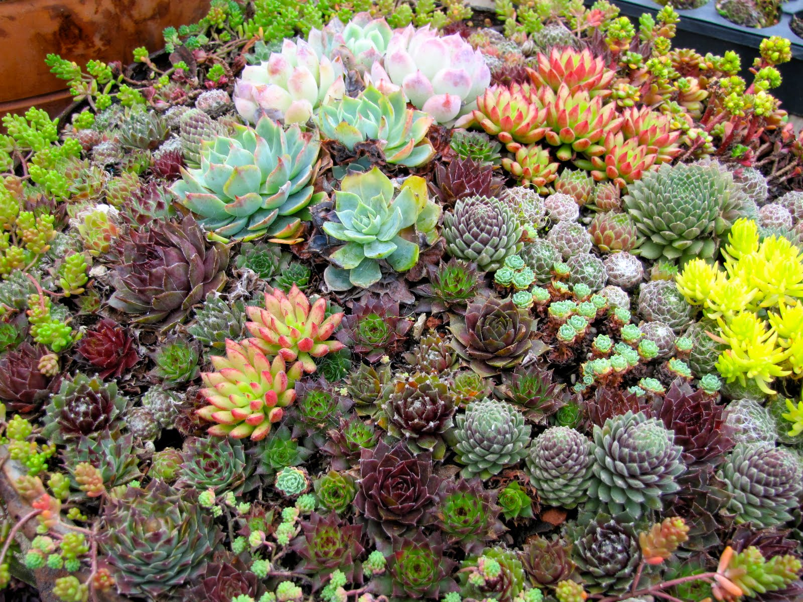 Ever Succulent Garden Design